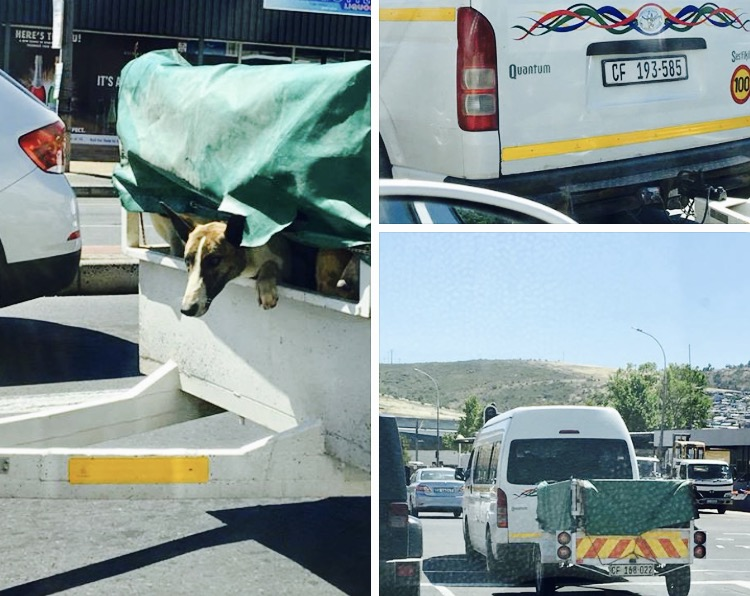 TAXI TRAILER FULL OF DOGS DRIVING RECKLESSLY N2 SOMERSET WEST