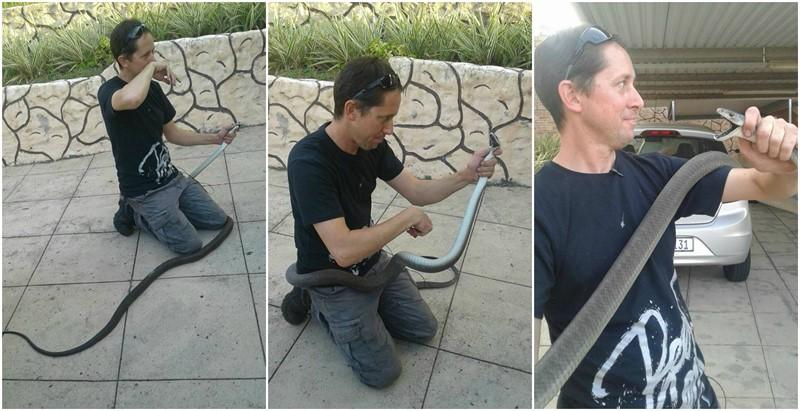 BLACK MAMBA SNAKE: A 2.5 meter Black Mamba Safely Captured in Verulam, KwaZulu Natal
