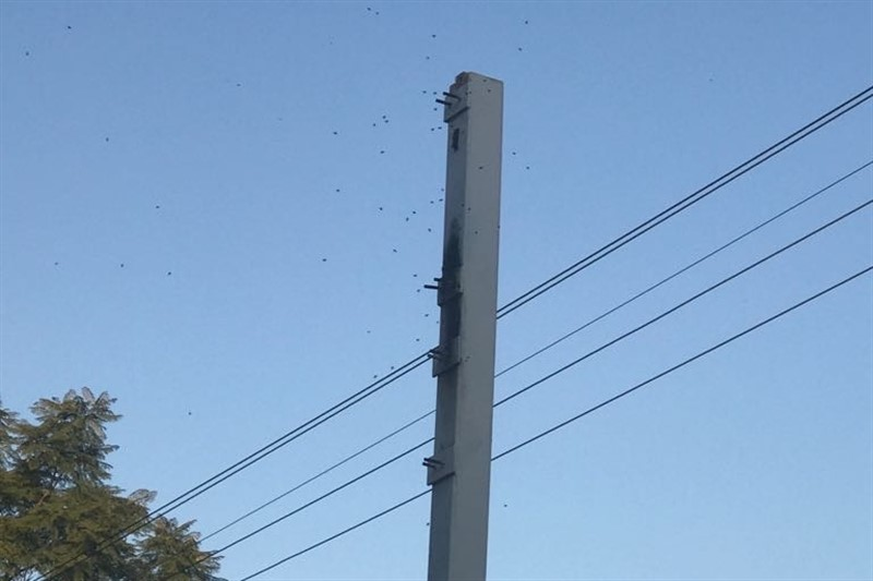 SWARM OF BEES STINGS ABOUT 10 PEOPLE AT A SHOPPING CENTRE PRETORIA NORTH
